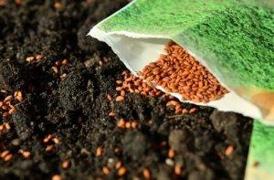 Rasen kalken mit Samen