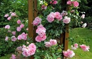 Gartenpavillon-rosen-300x195