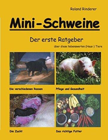 Mini Schweine -