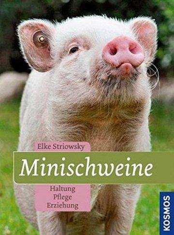 Minischweine -